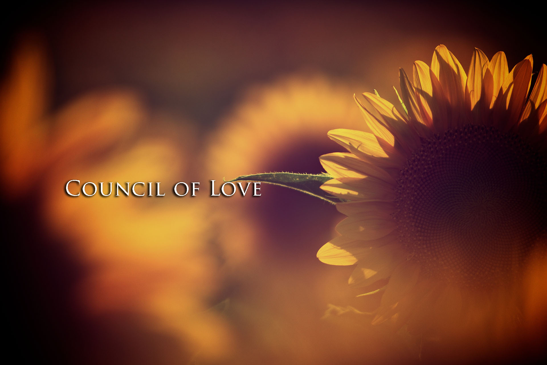 Summer Solstice 2017 Webcast – Council of Love with Linda Dillon