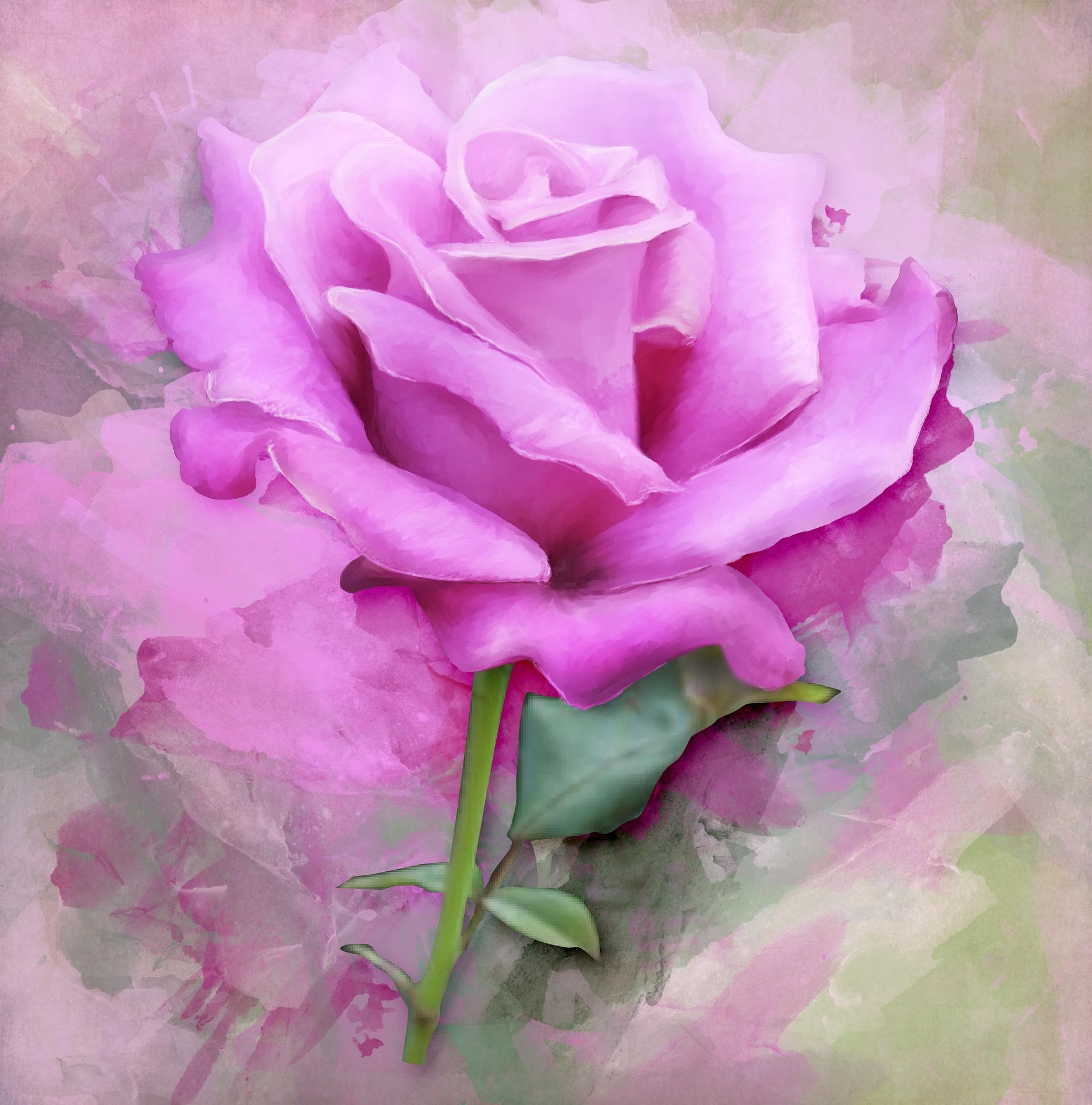rose-2421626_1920.jpg?profile=RESIZE_710x